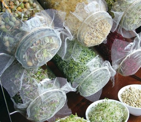 grow superfood sprouts from seeds in jars