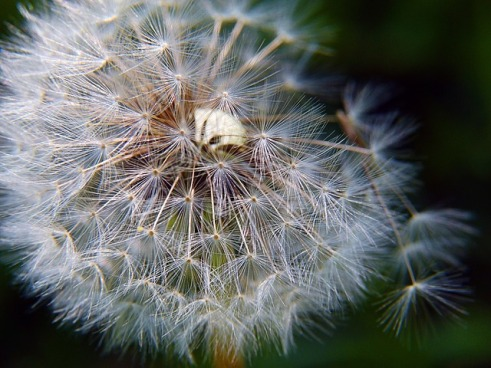 You can develop an allergy to many common things including grasses and flower pollen