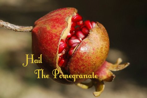hail the pomegranate
