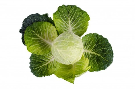 cabbage-1390046692DDy